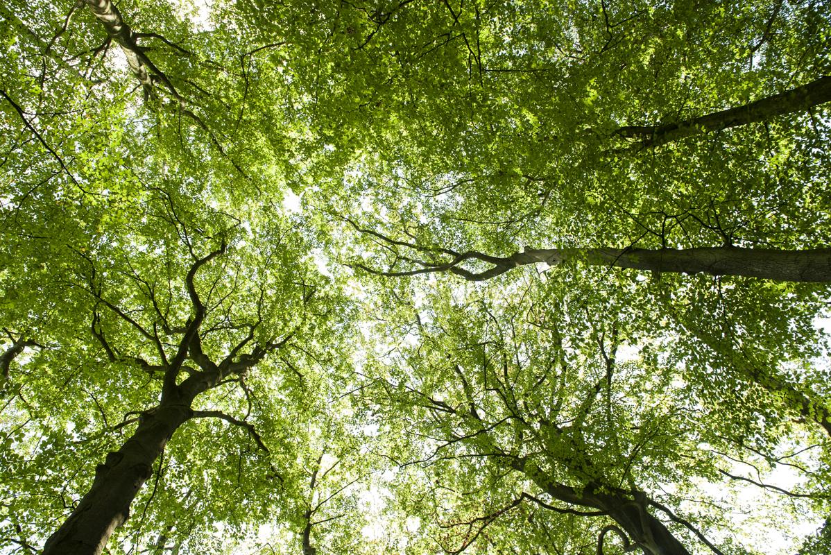 bomen doorkijkje bos buiten bosma fotografie